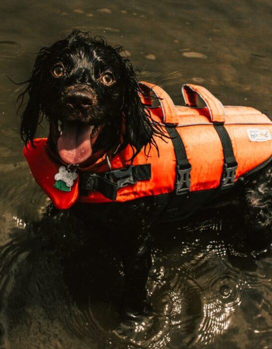 Hund i redningsvest